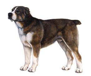 セントラル・アジア・シェパード・ドッグ - CENTRAL ASIA SHEPHERD DOG
