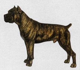 イタリアン・コルソ・ドッグ -  ITALIAN CORSO DOG