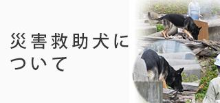災害救助犬について
