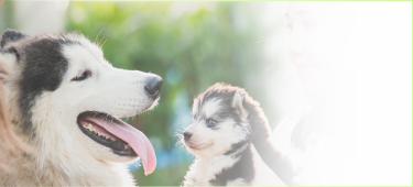 JKC愛犬飼育管理士