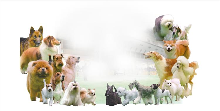 2021 FCIジャパンインターナショナルドッグショー 開催のご案内