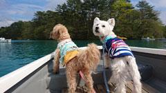 「船長!左側前方から他船接近中です!!」池田 ちか子
