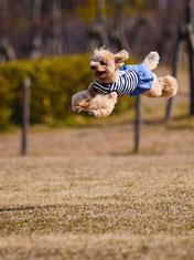 「笑顔で超ジャンプ」長谷川 正二
