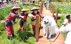 「愛犬と一緒」関矢 俊夫
