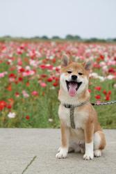 「初めてのお花畑」大橋 由美