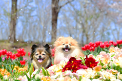 「花吹雪スマイル」岩亀 純子
