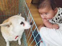 「はじめまして赤ちゃん」  楠間 知音