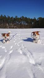 「雪、大好き!!」  小向 彩