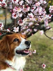 「花日和」  平野 佳子