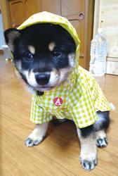「梅雨」小橋 隆さん