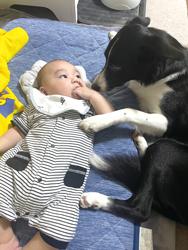 「お世話犬」千葉 神楽さん