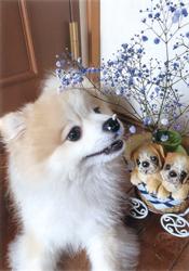 「いい香り」板谷 弥生さん