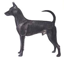 タイワン・ドッグ - TAIWAN DOG